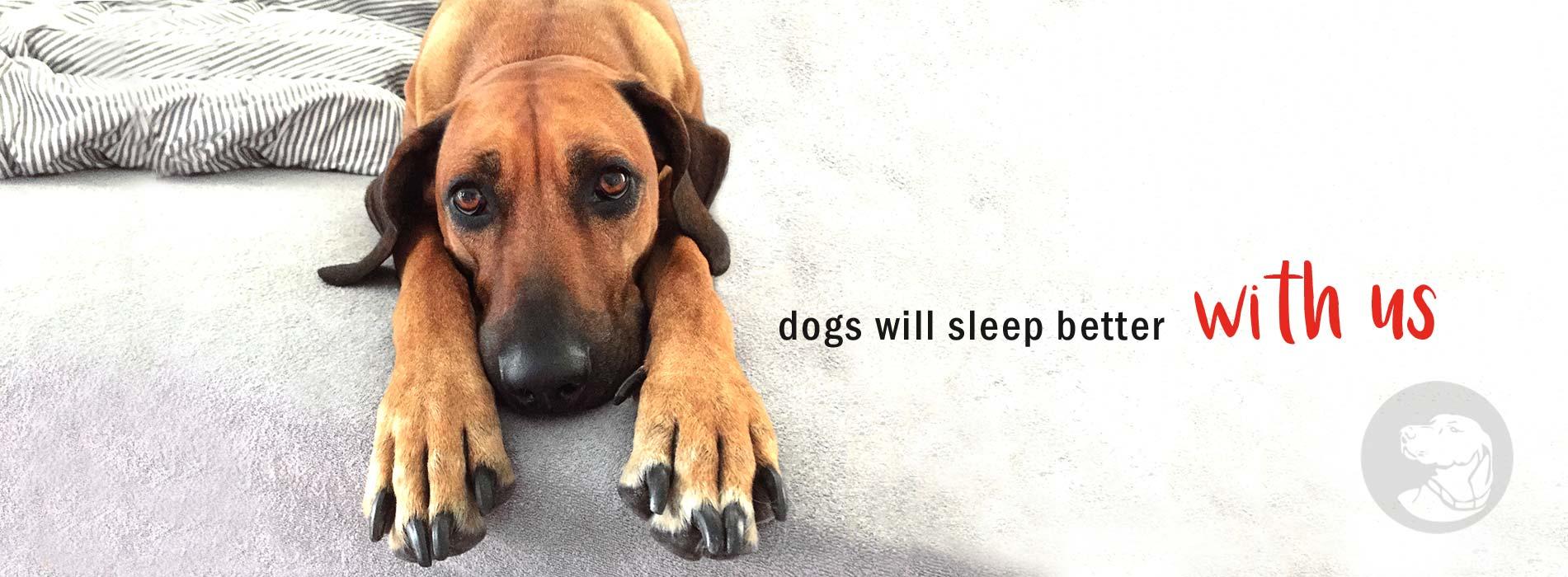 joodog Hundebetten Hersteller, Grosshandel, B2B,