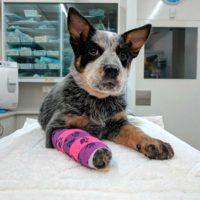 joodog Hundematten für Tierärzte und Kliniken, Sonderbezüge, Orthopädische Hundematte, Hundebetten Grosshandel, Wholesale.